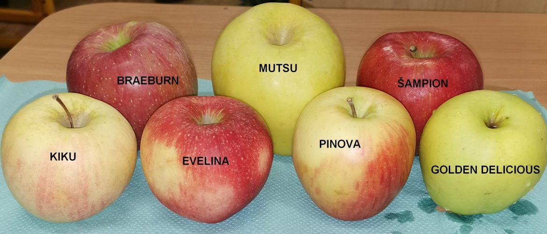 Svetový deň pôvodných odrôd jabĺk